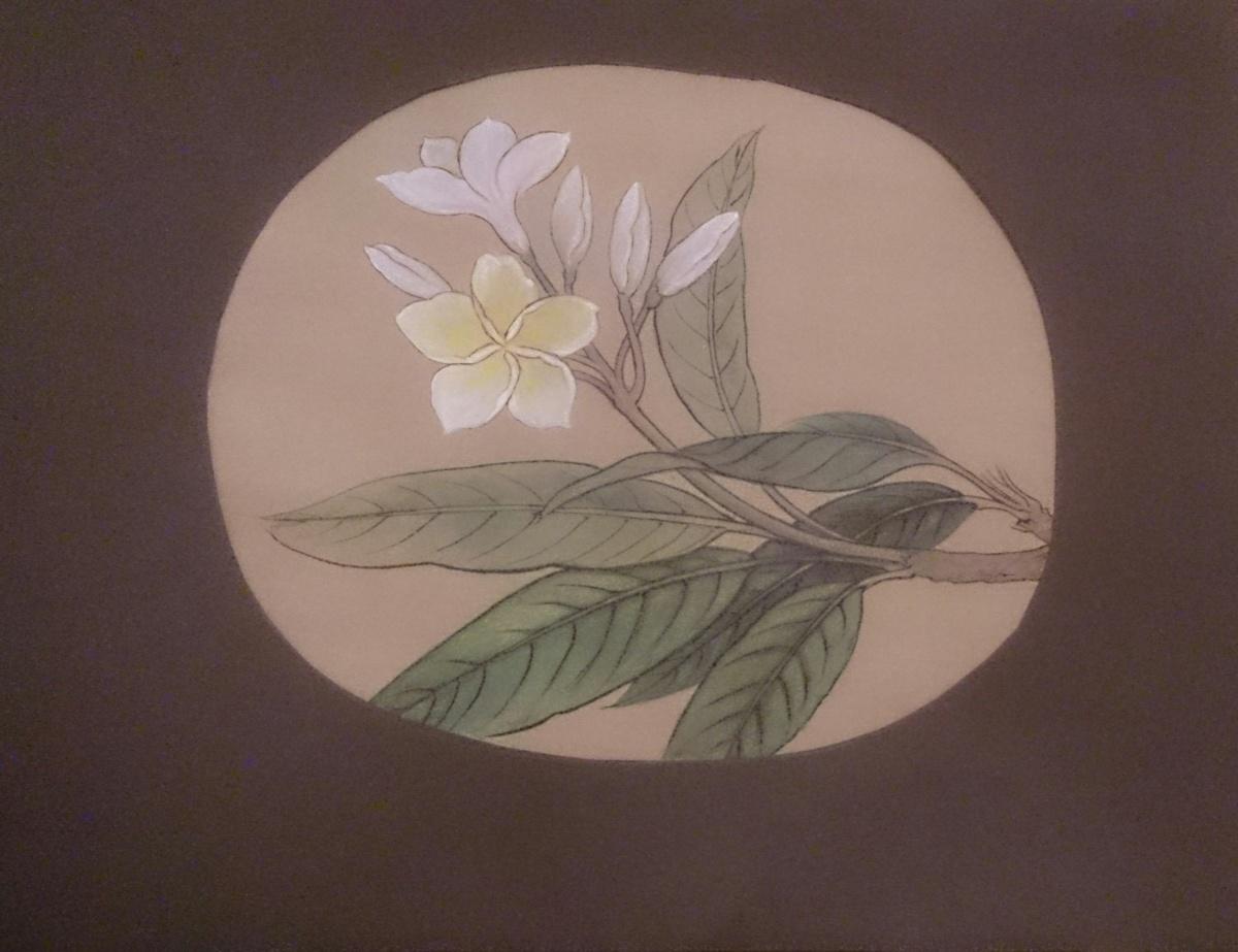 Plumeria blossom painting